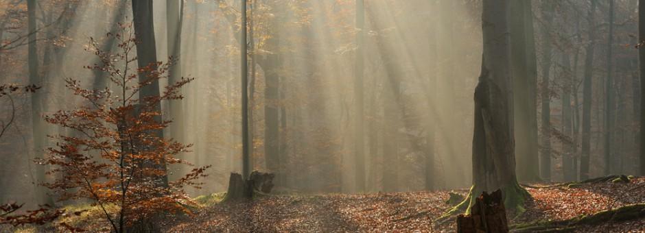 Serrahner-Buchenwald-I-_ferienwohnung-im-wald